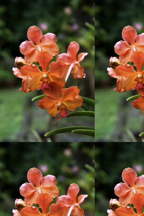 Tapeta Pixerstick Vanda, Orchid - Květiny