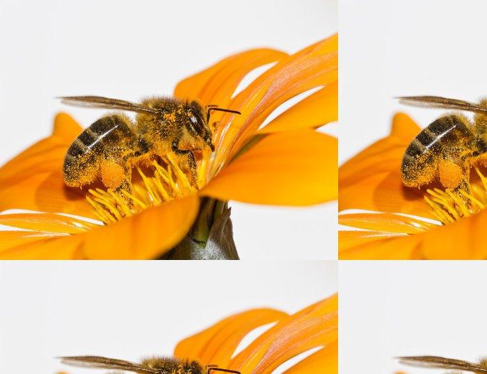 Tapeta Pixerstick Včela na květu - Ostatní Ostatní