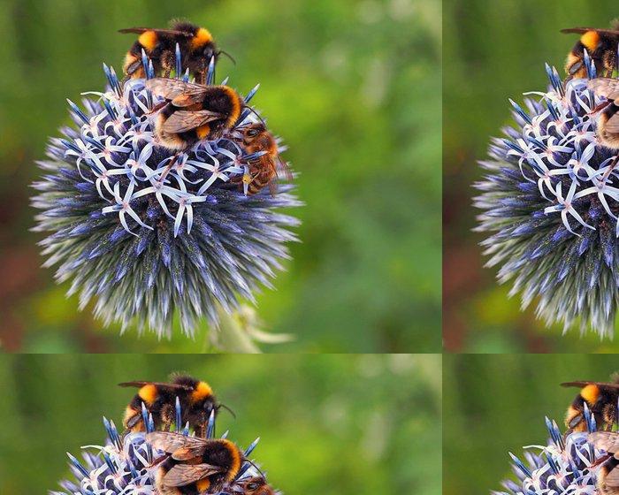 Tapeta Pixerstick Včely - Ostatní Ostatní