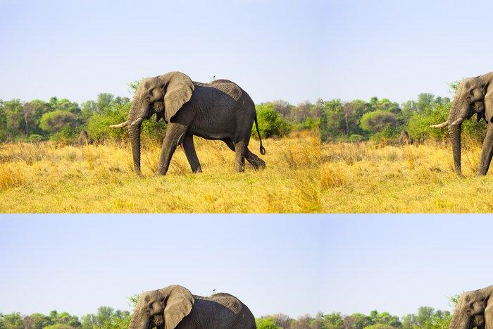 Tapeta Pixerstick Velké Slon africký - Témata