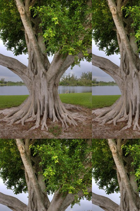 Tapeta Pixerstick Velký Banyan Tree - Amerika