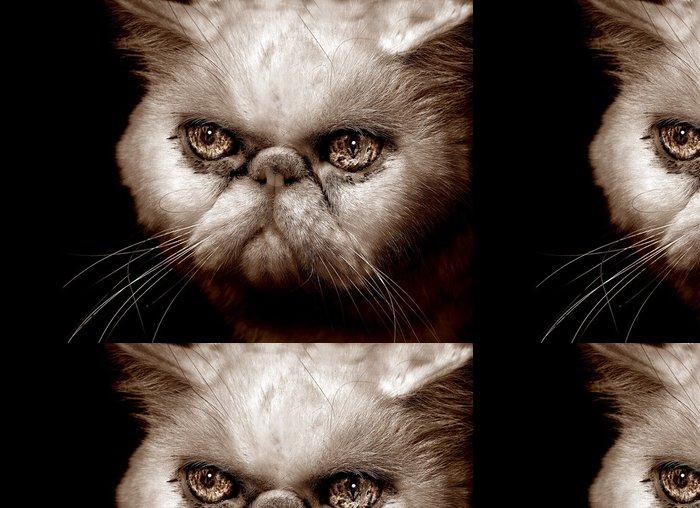 Vinylová Tapeta Velmi rozzlobený perská kočka - Savci