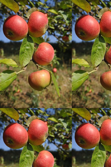 Tapeta Pixerstick Větev s jablky. - Stromy