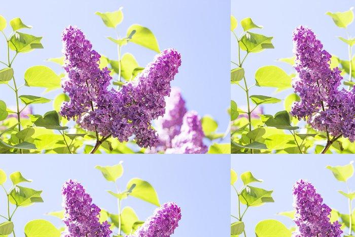 Vinylová Tapeta Větev s jarní kvítky - Květiny