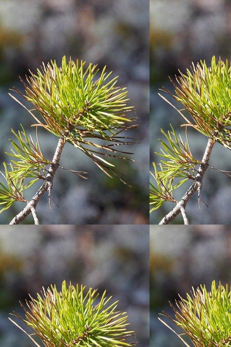 Tapeta Pixerstick Větve borovice - Stromy