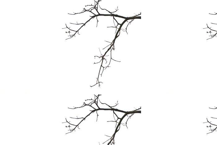 Tapeta Pixerstick Větve - Rostliny