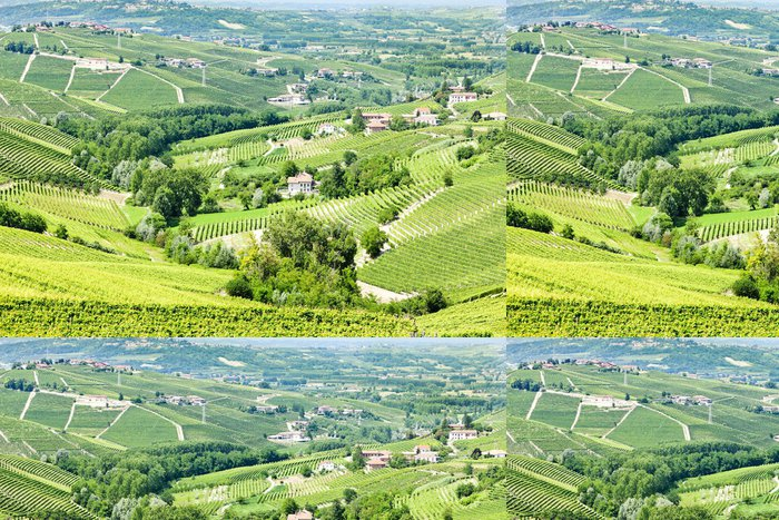 Vinylová Tapeta Vineyars blízko Barbaresco, Piemont, Itálie - Zemědělství