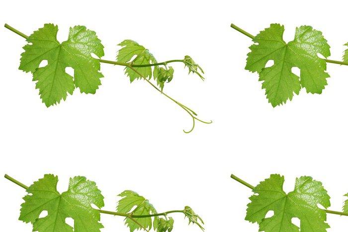 Tapeta Pixerstick Vinné listy izolované - Jídla