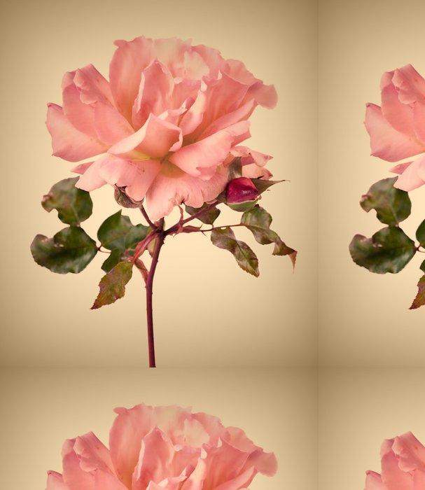 Tapeta Pixerstick Vintage zahrada růžové růže - Květiny