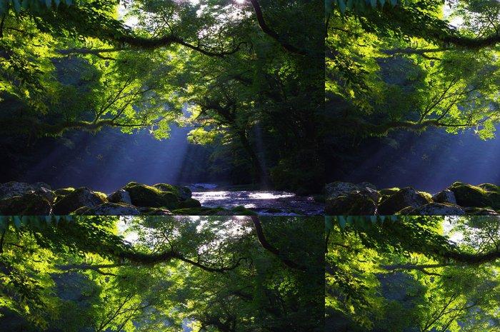 Tapeta Pixerstick 原生 林 と 渓流 と 光芒 Virgin forest a hřídel paprsek světla - Přírodní krásy