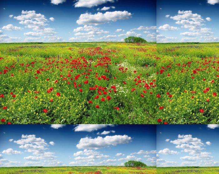 Tapeta Pixerstick Vlčí máky, kvetoucí v divoké louce - Nebe