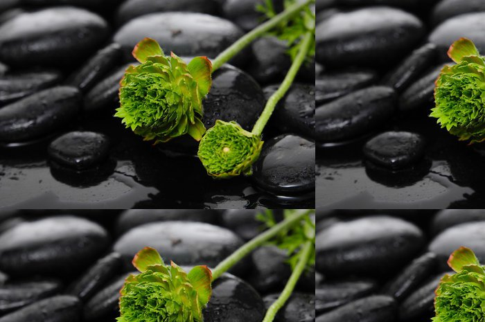 Tapeta Pixerstick Vleže zelené hortenzie na kameni ve vodních kapek - Životní styl, péče o tělo a krása