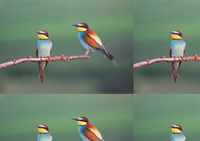 Tapeta Pixerstick Vlha jedlíci ve večerních hodinách - Ptáci