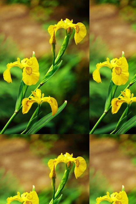 Tapeta Pixerstick Vousatý kosatec žlutý - Květiny