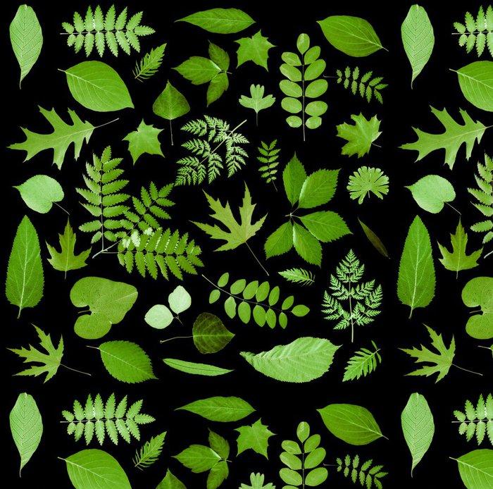 Vinylová Tapeta Všechny druhy zelených listů - Rostliny