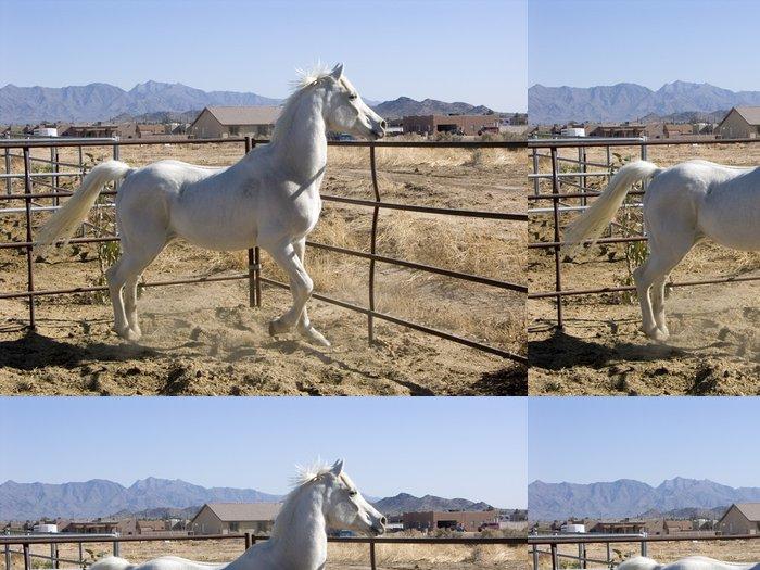 Vinylová Tapeta Vzpínajícího se bílého koně - Savci