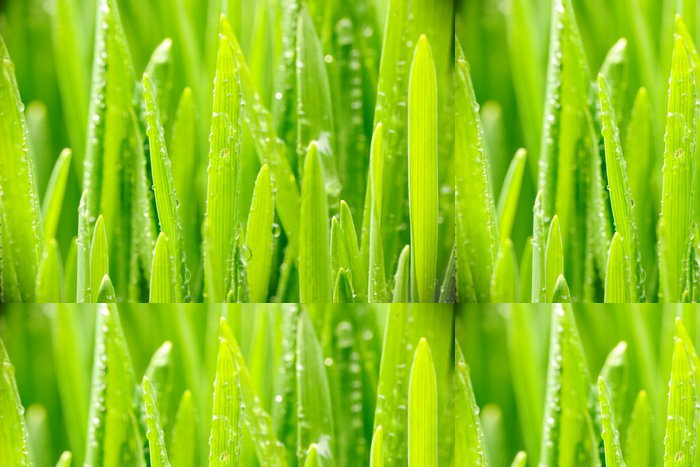 Tapeta Pixerstick Waterdrops na trávě - Roční období