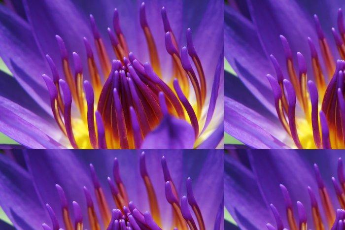 Tapeta Pixerstick Waterlily - Květiny