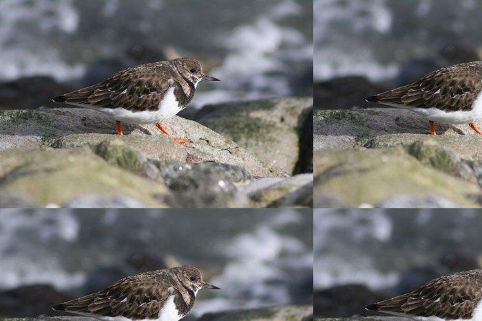 Tapeta Pixerstick Watt běžci na kamenech 1.4 - Ptáci