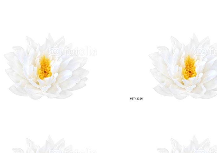 Tapeta Pixerstick White Lotus krása - Květiny