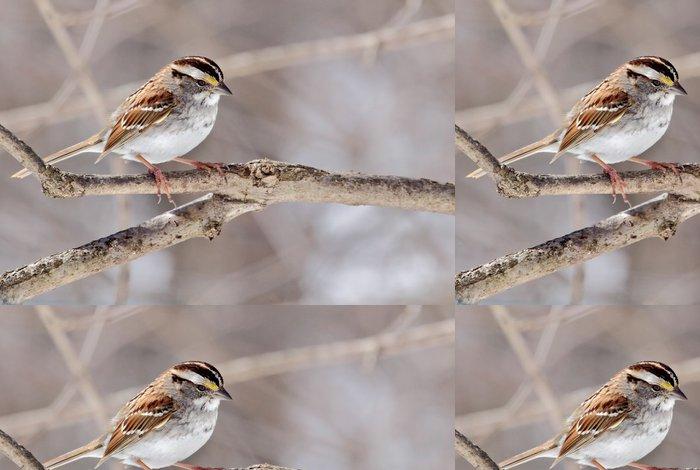 Tapeta Pixerstick White-throated Sparrow, Zonotrichia albicollis - Témata