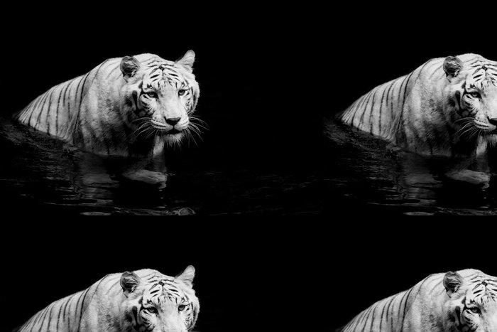 Tapeta Pixerstick White tiger -