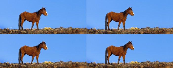 Tapeta Pixerstick Wild Mustang Koně - Savci