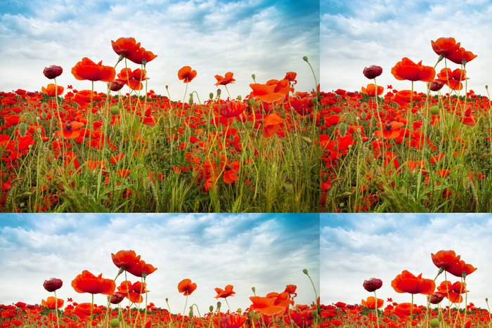 Tapeta Pixerstick Wild Red Poppies venkov pole s neuvěřitelnou oblohou - Témata
