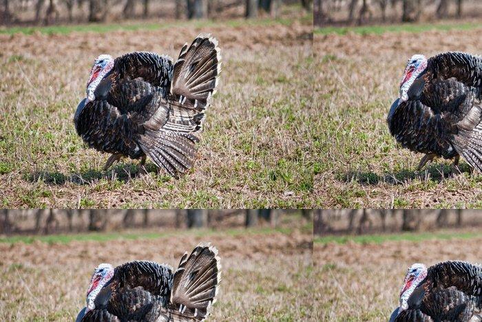 Vinylová Tapeta Wild Turkey - Ptáci