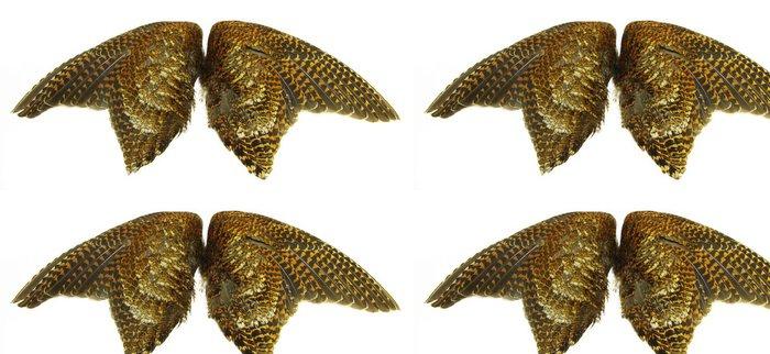 Vinylová Tapeta Woodcock křídla (s využitím pro výcvik loveckých psů) - Ptáci