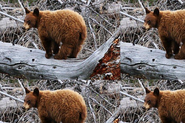 Tapeta Pixerstick Yellowstone medvěd - Témata