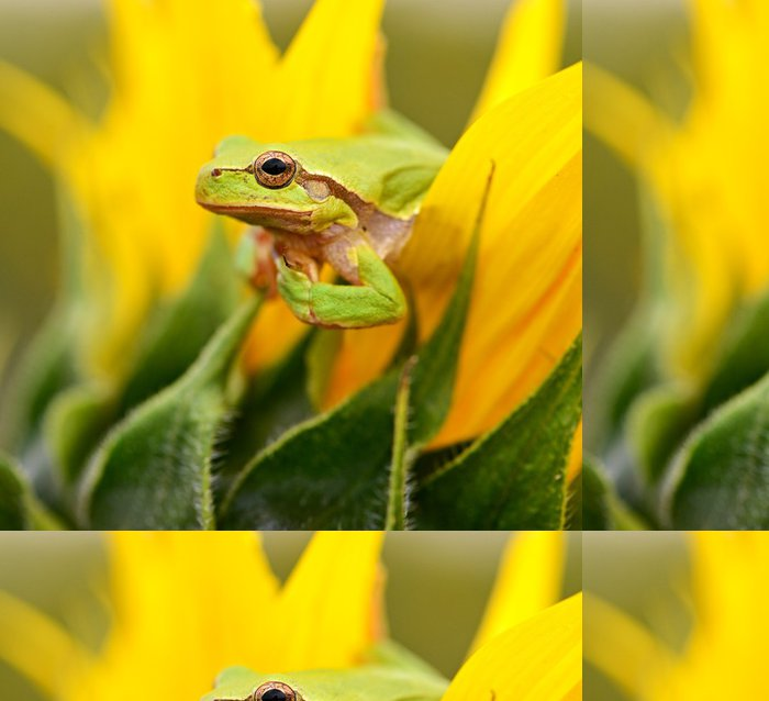 Tapeta Pixerstick Žába - Ostatní Ostatní