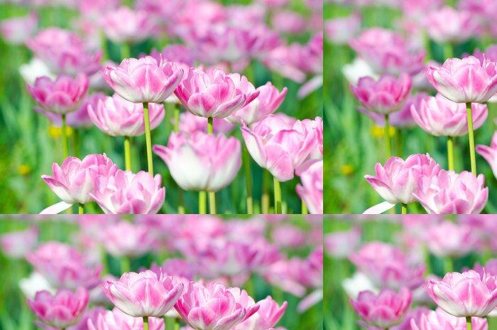 Tapeta Pixerstick Zahrada s květy tulipánů v létě - Květiny