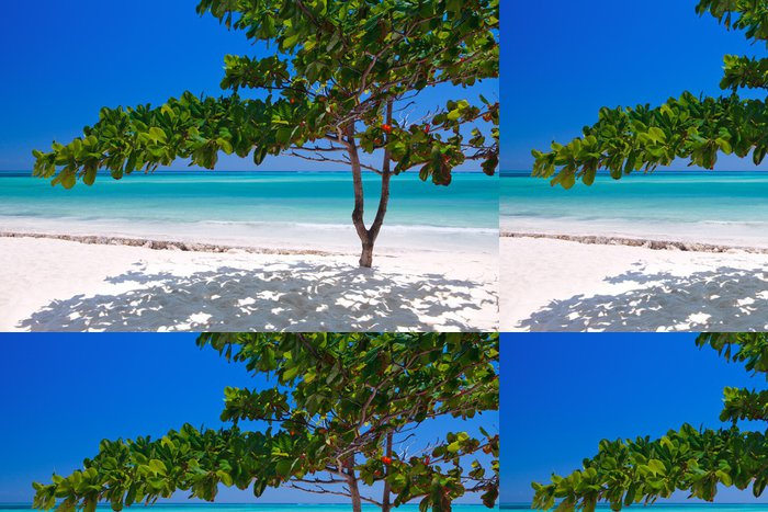 Tapeta Pixerstick Zanzibar tropický strom na pláži - Afrika