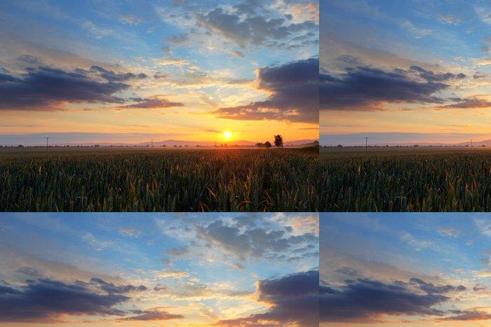 Tapeta Pixerstick Západ slunce nad pšeničné pole. - Zemědělství