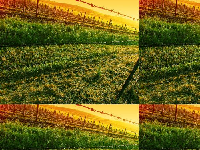 Tapeta Pixerstick Západ slunce nad vinice - Roční období