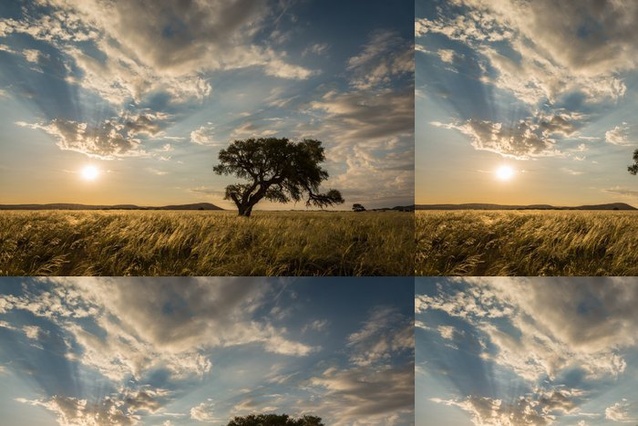 Tapeta Pixerstick Zapadající slunce za stromem v Sossusvlei, Namibie - Příroda a divočina