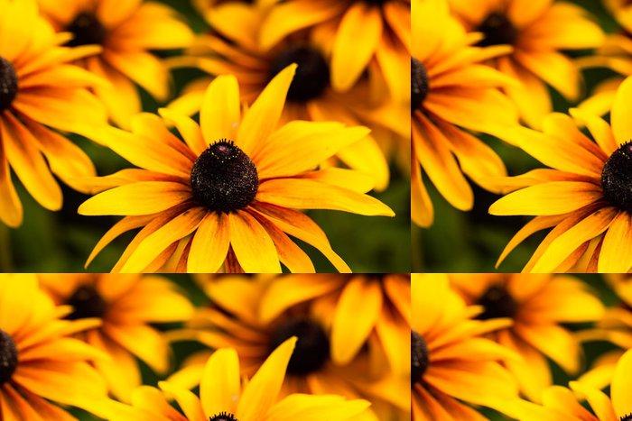 Tapeta Pixerstick Zářivě žlutá Rudbeckia květiny v zahradě - Roční období