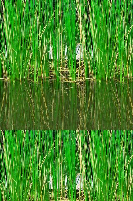 Tapeta Pixerstick Závod rákosí v jezeře - Rostliny