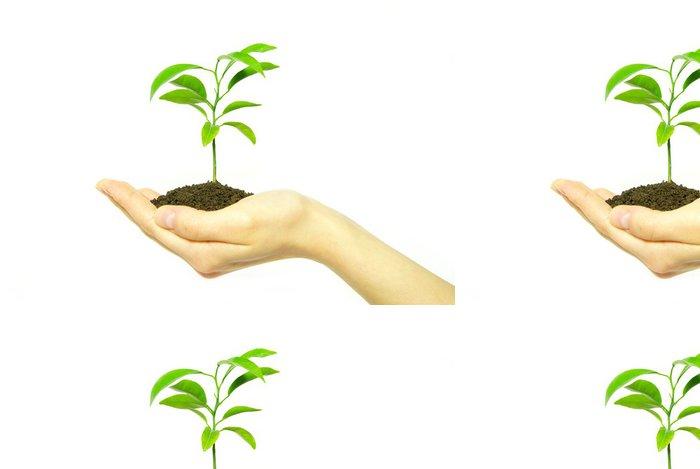 Tapeta Pixerstick Závod v ruce - Rostliny