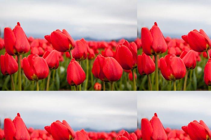 Tapeta Pixerstick Zblízka červené tulipány - Témata