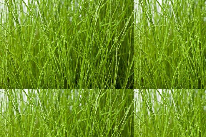 Tapeta Pixerstick Zblízka pohled na kapkami rosy na zelené trávě - Roční období