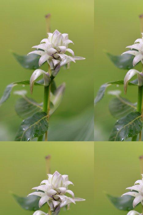 Vinylová Tapeta Zblízka střílel z jediného Alpinia purpurata květ - Květiny