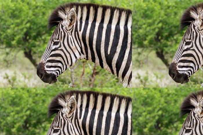 Tapeta Pixerstick Zebra Head - Témata