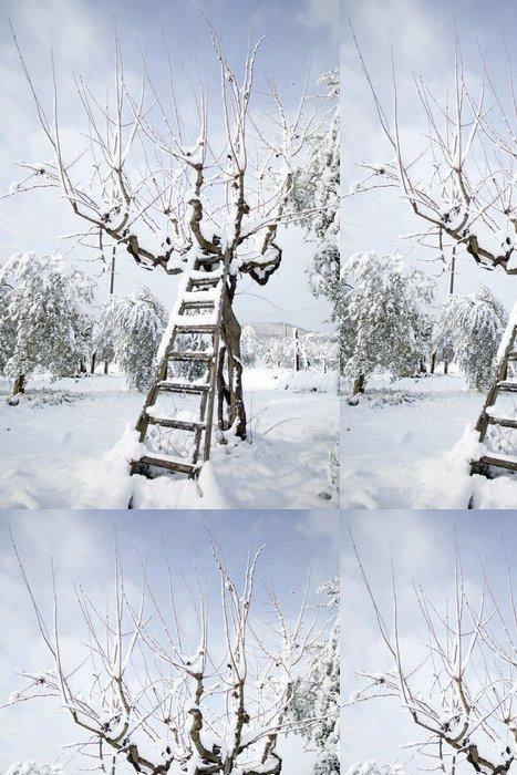 Tapeta Pixerstick Žebřík opřený olivovníku ve sněhu - Roční období