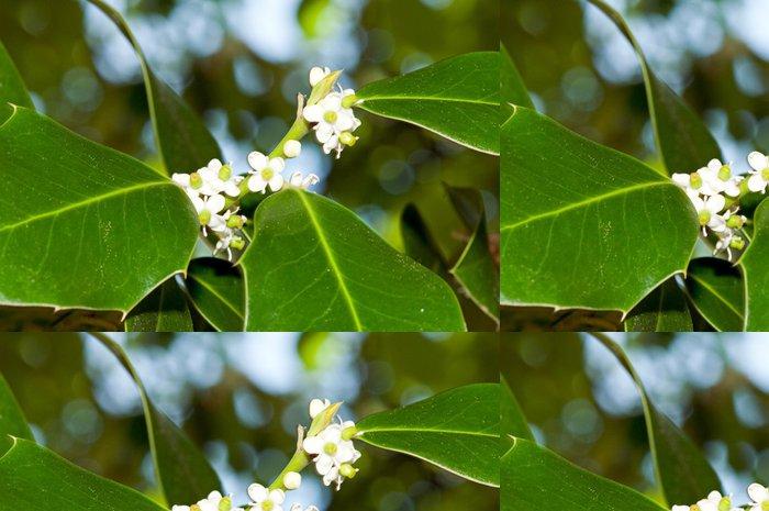 Vinylová Tapeta Zeleň a květy cesmíny (Ilex aquifolium) - Stromy