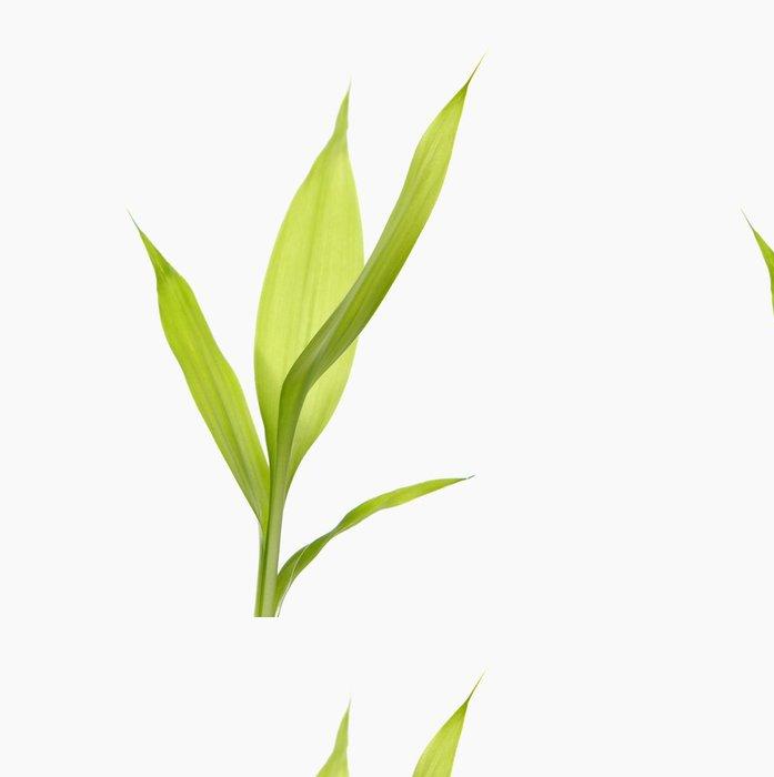 Tapeta Pixerstick Zelená bambusu výhonek - Životní styl, péče o tělo a krása