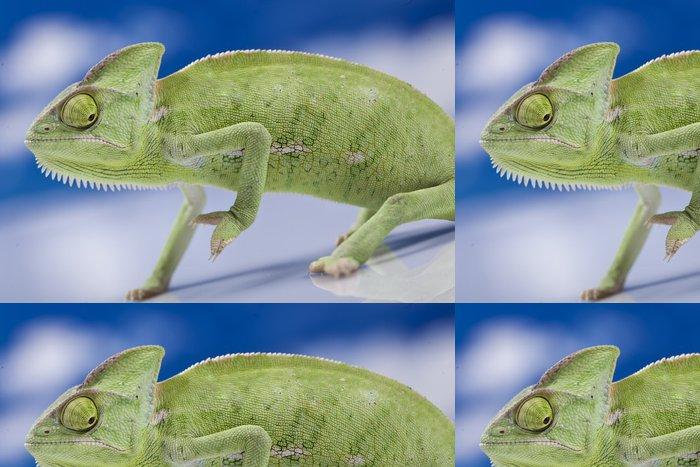 Tapeta Pixerstick Zelená chameleon - Témata