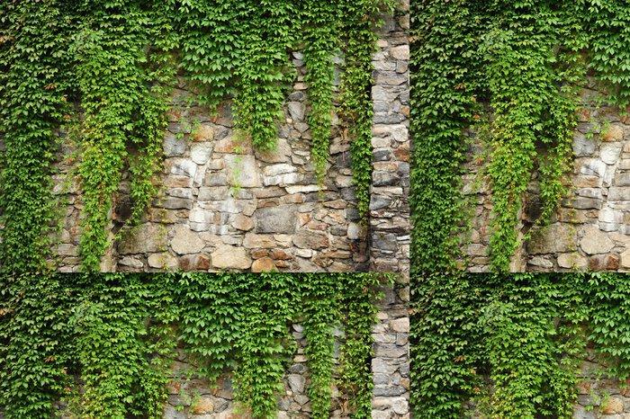Vinylová Tapeta Zelená Ivy - Evropa