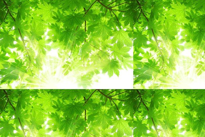 Tapeta Pixerstick Zelená javorové listy se slunečními paprsky - Stromy
